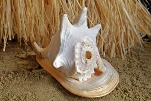 SH3 HELMET CONCH SHELL