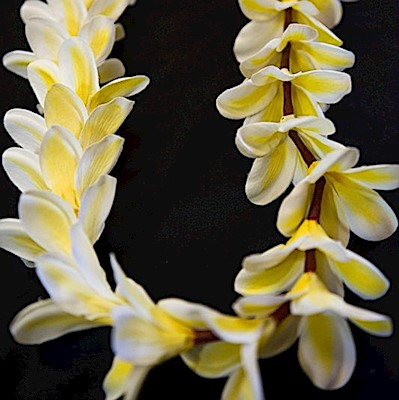 "YELLOW or PINK PLUMERIA LEI  - ""REAL LOOKING"""